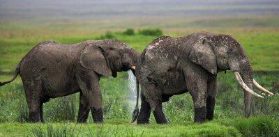 Papiers peints Deux éléphants à Savannah. Afrique. Kenya. Tanzanie. Serengeti. Maasai Mara. Une excellente illustration.