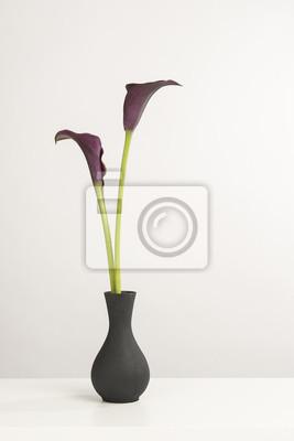 Deux fleurs de lys calla noir dans un vase noir sur une étagère blanche sur un fond blanc