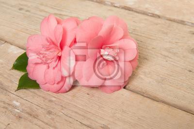 Deux fleurs roses de camélia rose sur un fond de planche de bois