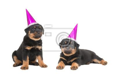 Deux, mignon, rottweiler, Chiots, Porter, fête, chapeaux, isolé, blanc, fond