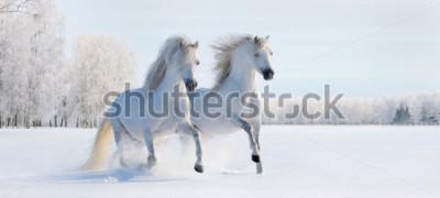 Papiers peints Deux poneys gallois blancs au galop sur neige