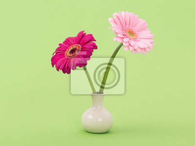 Deux, rose, gerber, marguerites, blanc, vase, vert, fond