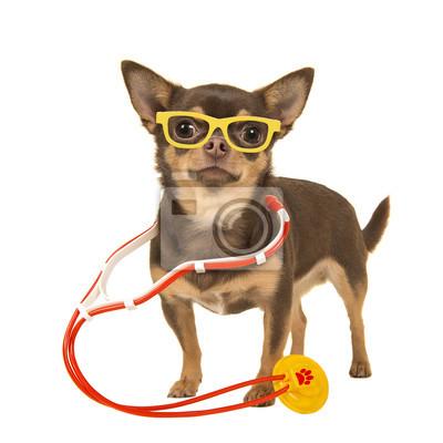 Docteur chihuahua vous souhaitant un prompt rétablissement