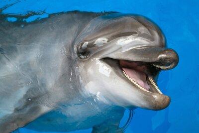 Papiers peints Dolphin regardant