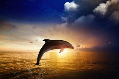 Papiers peints Dolphin saut