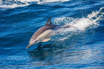 Papiers peints Dolphin, Sauter, dehors, mer