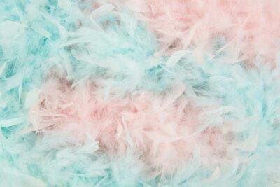 Doux plumes bleu et rose d'un boa dans un cadre total