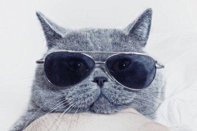 Papiers peints Drôle museau de chat gris lunettes de soleil