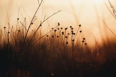 Papiers peints dry orange grass at sunset