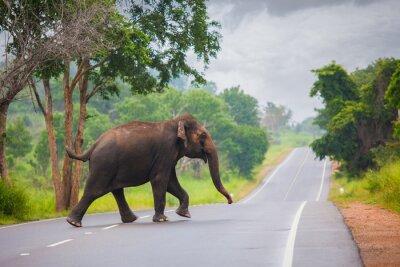 Papiers peints Éléphant