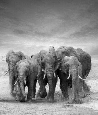 Papiers peints Elephant
