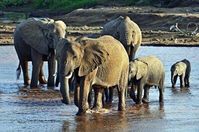 Papiers peints Éléphant dans la savane