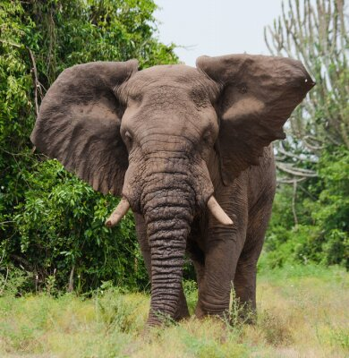 Papiers peints Éléphant dans la savane. Tir de ballon à air chaud. Afrique. Kenya. Tanzanie. Serengeti. Maasai Mara. Une excellente illustration.