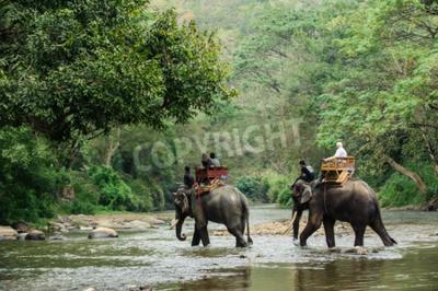 Papiers peints Elephant trekking à travers la jungle dans le nord de la Thaïlande
