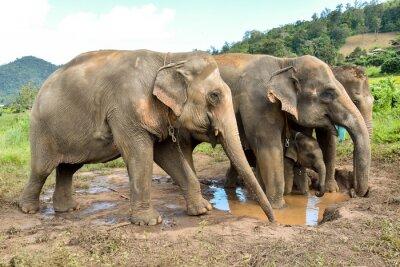 Papiers peints Éléphant, troupeau, bébé, éléphant, billabong