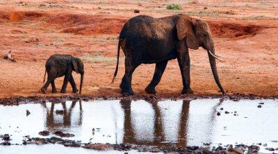 Papiers peints Éléphant, Tsavo, Est, national, Parc