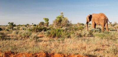 Papiers peints Éléphant, Tsavo, Est, national, Parc, Kenya