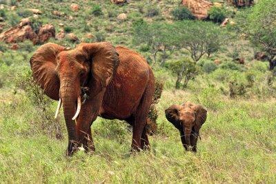 Papiers peints Eléphants