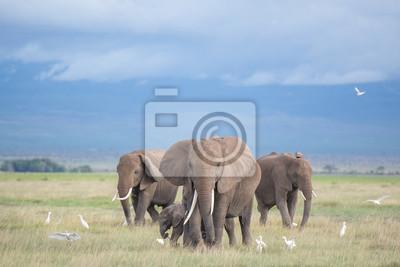 Papiers peints éléphants à Amboseli / famille