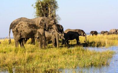 Papiers peints Éléphants boire de la rivière Chobe