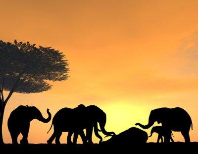 Papiers peints Elephants Morn Their Dead at sunset, a very tender scene.