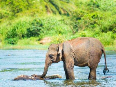 Papiers peints Elephat