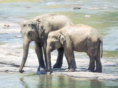Papiers peints Elephatnts