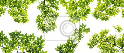 Papiers peints Ensemble, branche, feuilles, isolé, blanc, fond
