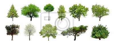 Papiers peints Ensemble d'arbres verts isolé sur fond blanc. Différents types de collection d'arbres
