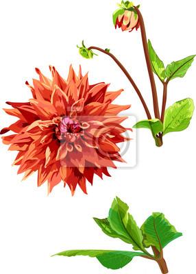 ensemble de Georgina fleurs et les feuilles 1