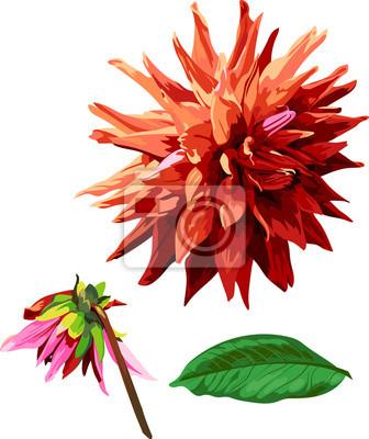 ensemble de Georgina fleurs et les feuilles 2