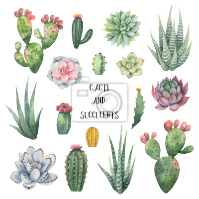 Ensemble De Vector Aquarelle De Cactus Et Plantes Succulentes Papier