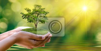 Papiers peints environnement Jour de la Terre Dans les mains des arbres qui font pousser des semis. Fond de bokeh vert main féminine tenant l'arbre sur l'herbe de champ nature concept de conservation de forêt