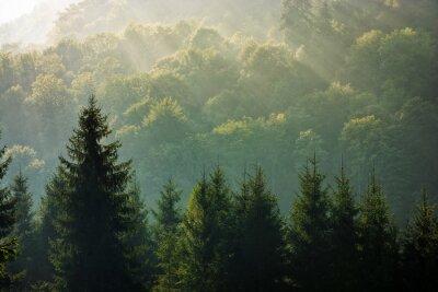 Papiers peints Épicéa, forêt, brumeux, Lever soleil, montagnes