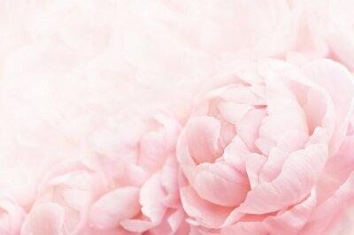 Papiers peints Été fleurissant cadre de pivoine délicate, floraison des pivoines fleurs fond festif, pastel et carte floral doux, mise au point sélective, tonique