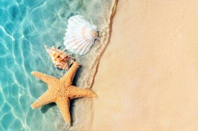 Papiers peints étoile de mer et coquillage sur la plage d'été en eau de mer.