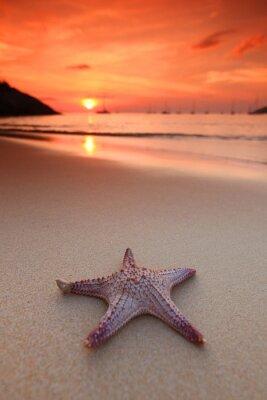 Papiers peints Étoiles de mer sur la plage