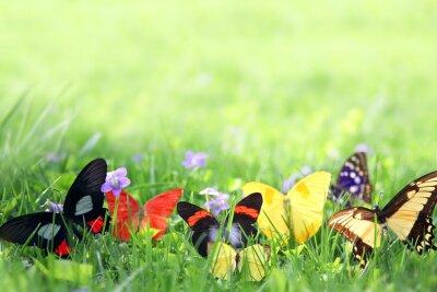 Papiers peints Exotique Fond Papillons Encadrement Green Grass