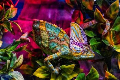 Papiers peints Exposition d'animaux de terrarium à Uzhhorod