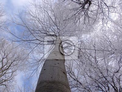Papiers Peints Exterieur Foret Bois Nature Hiver Arbre Naturel Saisonnier
