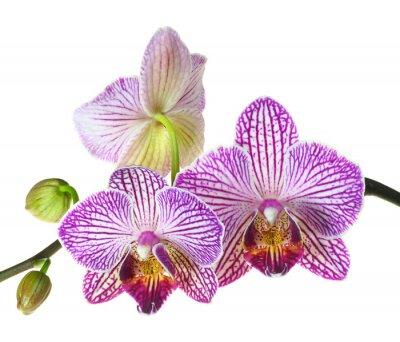 Papiers peints Extrême profondeur de champ Photo d'un orchidée trois fleurs