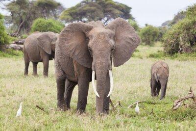 Papiers peints Famille d'éléphants au Kenya