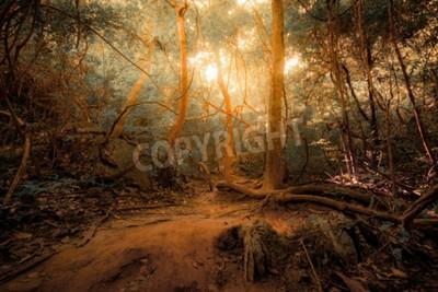 Papiers peints Fantaisie forêt de jungle tropicale dans des couleurs surréalistes. Concept, paysage, mystérieux, fond