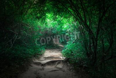 Papiers peints Fantaisie, paysage, tropical, jungle, forêt, tunnel, chemin ...