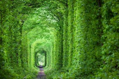 Papiers peints Fantastique Tunnel Real d'Amour, arbres verts et la voie ferrée