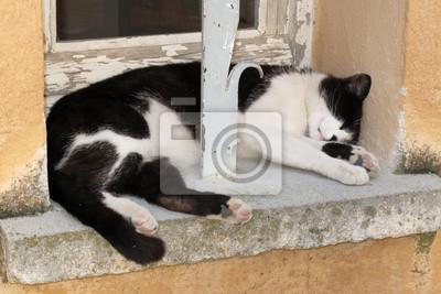 felino domestico gatto che sul dorme davanzale