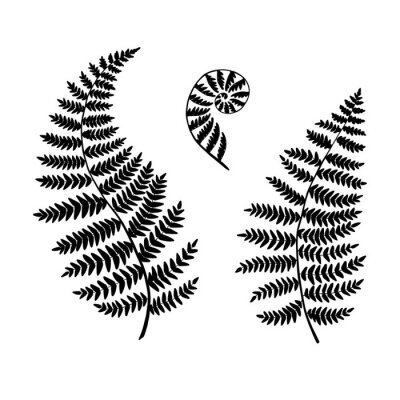 Papiers peints Fern silhouettes isolated on a white backgroubd. Vector.