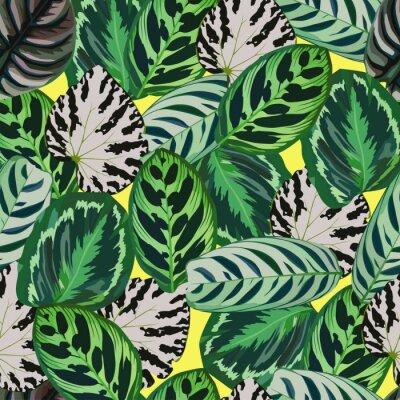 Feuillage Exclusif A La Mode Ensemble Begonia Exotique Feuilles