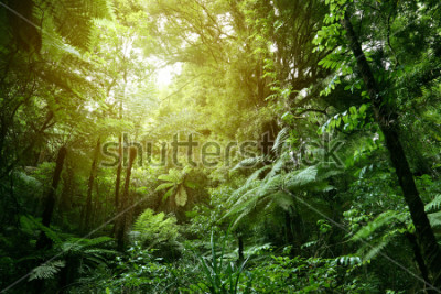 Papiers peints Feuillage vert luxuriant dans la jungle tropicale