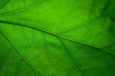 Papiers peints Feuille verte